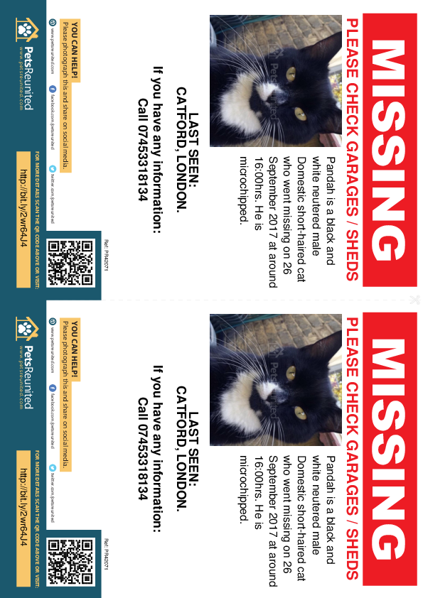 Lost pet flyers - Lost cat: Black and white cat called Pandah