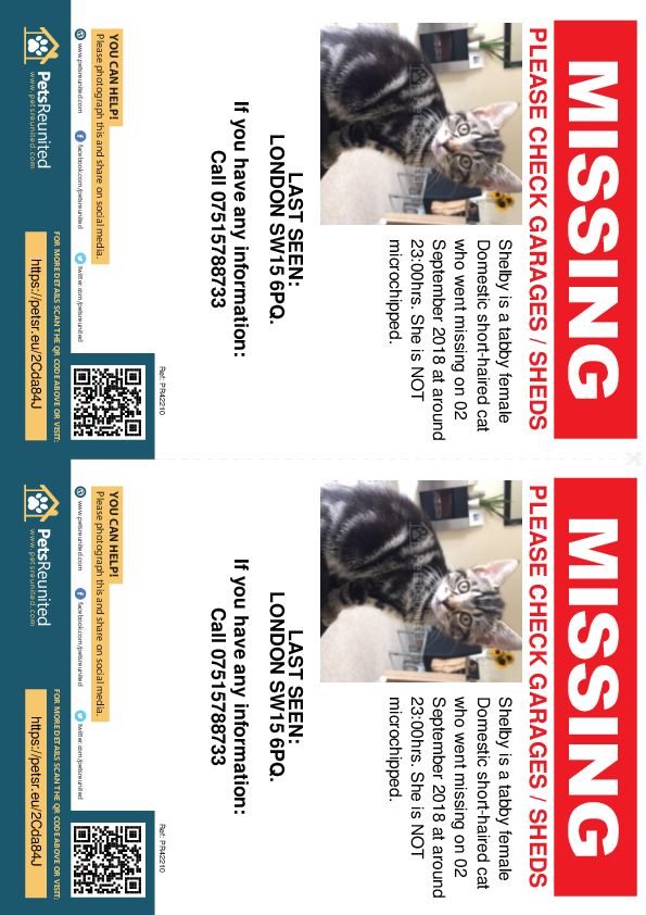 Lost pet flyers - Lost cat: Tabby cat called Shelby