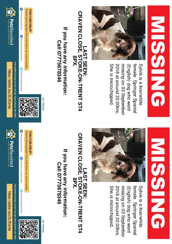 Lost pet flyers - Lost dog: Liver/White Springer Spaniel (English) dog called Sylvie