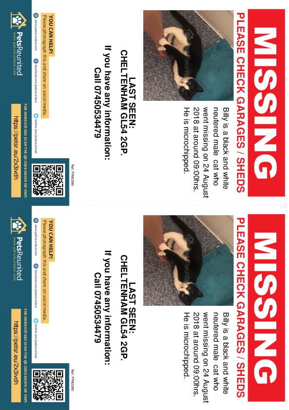 Lost pet flyers - Lost cat: Black and white cat called Billy