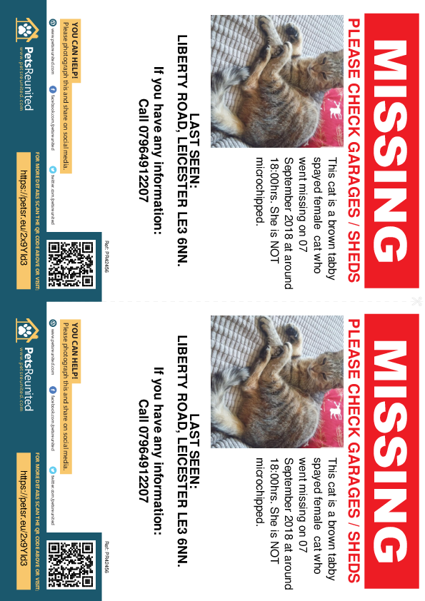 Lost pet flyers - Lost cat: Brown tabby cat [name witheld]