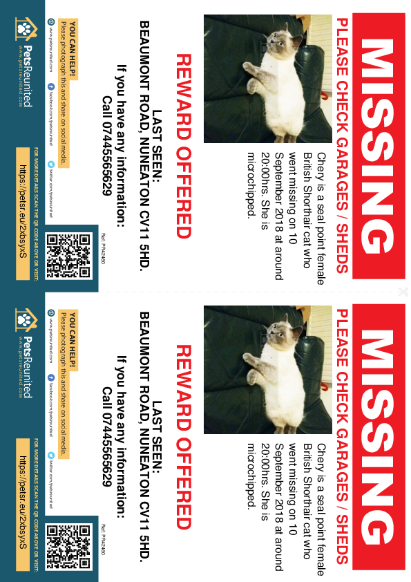Lost pet flyers - Lost cat: Seal point British Shorthair cat called Chery