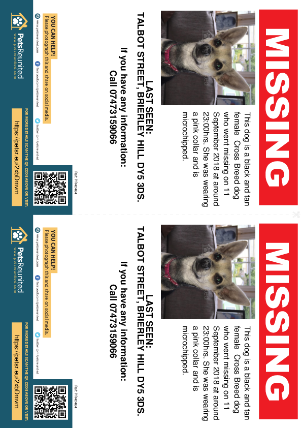 Lost pet flyers - Lost dog: Black and Tan dog [name witheld]