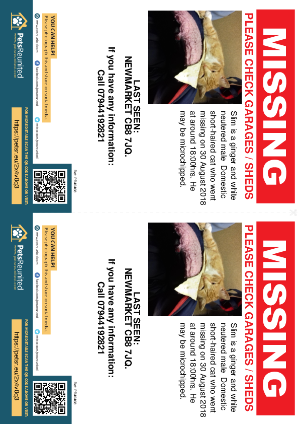 Lost pet flyers - Lost cat: Ginger and white cat called Slim