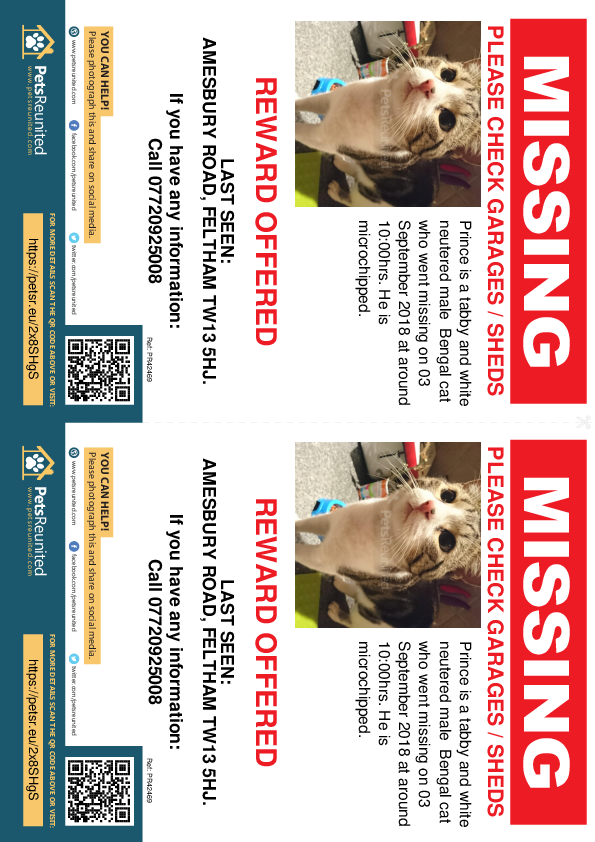 Lost pet flyers - Lost cat: Tabby and white Bengal Cross cat called Prince