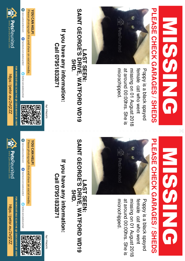 Lost pet flyers - Lost cat: Black cat called Poppy