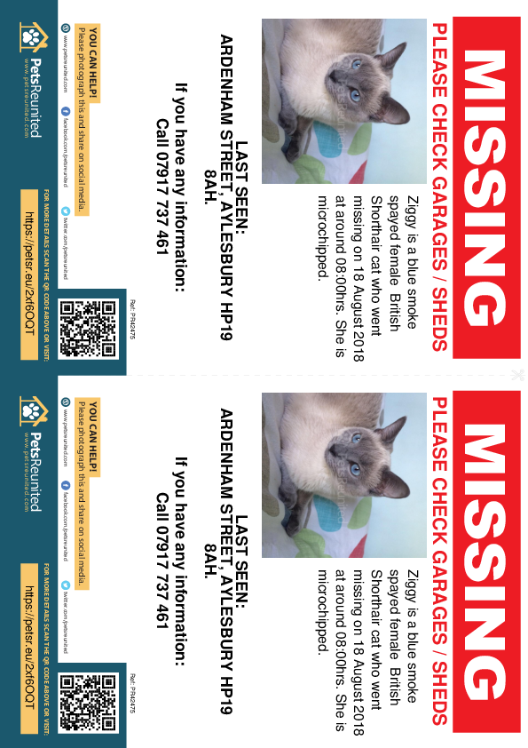 Lost pet flyers - Lost cat: Blue Smoke British Shorthair cat called Ziggy
