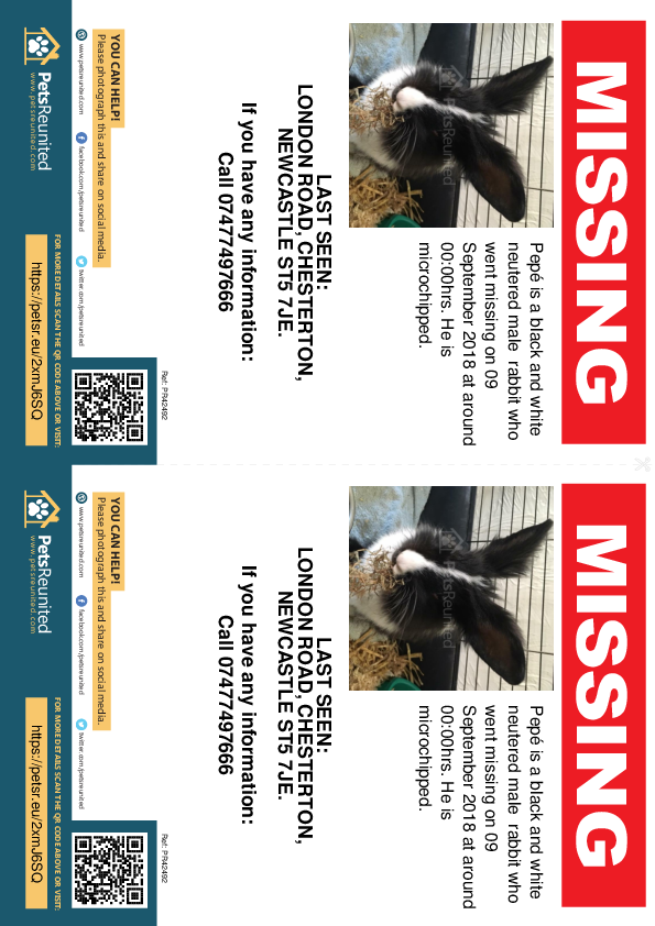 Lost pet flyers - Lost rabbit: Black and white rabbit called Pepé