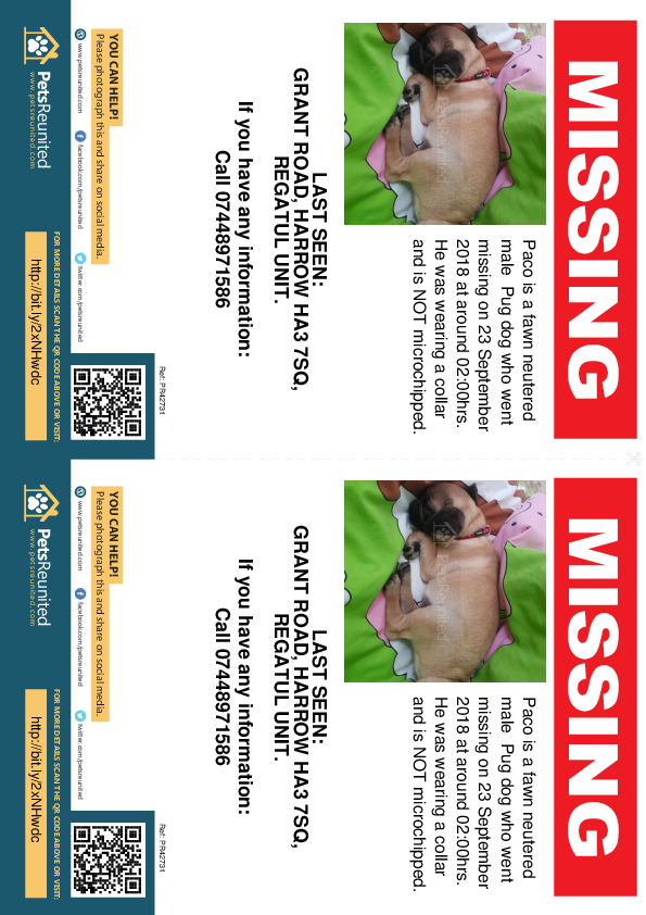 Lost pet flyers - Lost dog: Fawn Pug dog called Paco