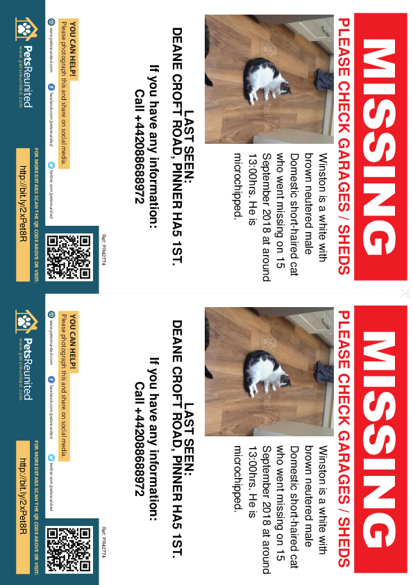 Lost pet flyers - Lost cat: White with Brown cat called Winston