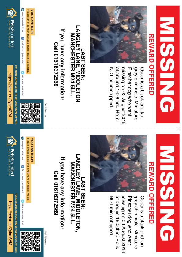 Lost pet flyers - Lost dog: Black and Tan grey chin Miniature Pinscher dog called Oscar