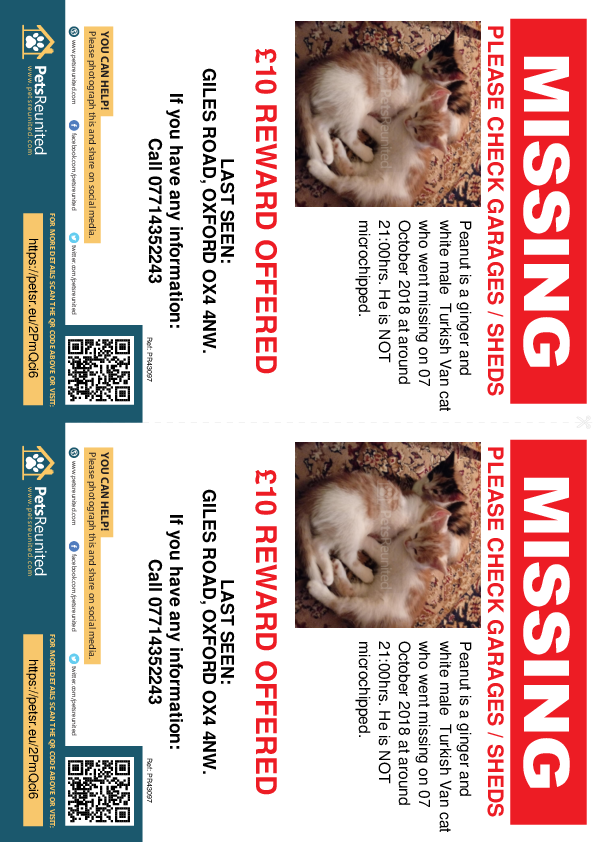 Lost pet flyers - Lost cat: Ginger and White Turkish Van cat called Peanut