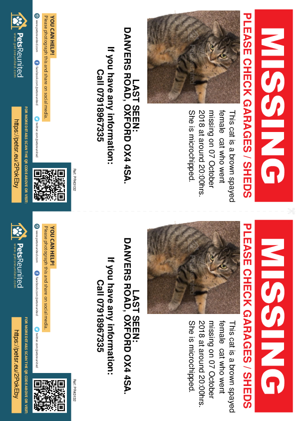 Lost pet flyers - Lost cat: Brown cat [name witheld]