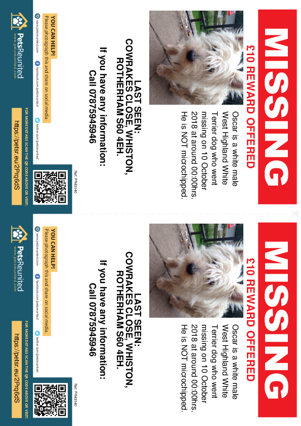 Lost pet flyers - Lost dog: White West Highland White Terrier dog called Oscar