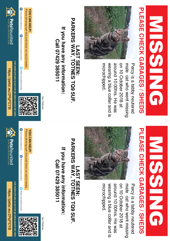 Lost pet flyers - Lost cat: Tabby cat called Percy