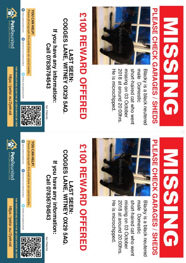 Lost pet flyers - Lost cat: Black cat called Blacky