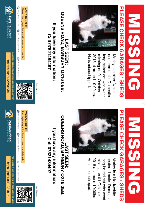 Lost pet flyers - Lost cat: Black/White cat called Marley