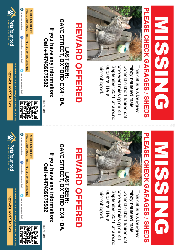 Lost pet flyers - Lost cat: Silver/Grey Tabby cat [name witheld]