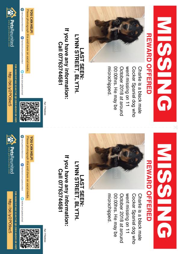 Lost pet flyers - Lost dog: Black Cocker Spaniel dog called Charlie