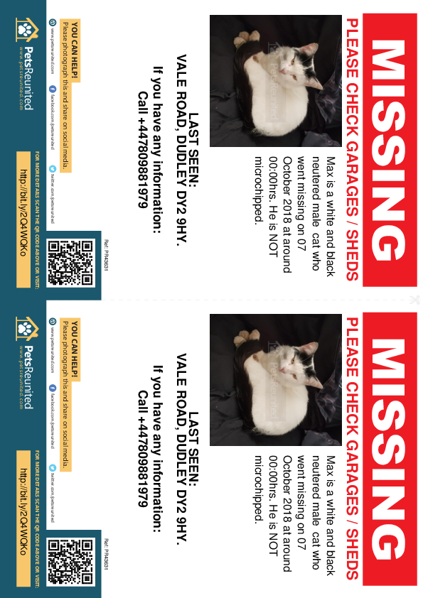Lost pet flyers - Lost cat: white and black cat called Max