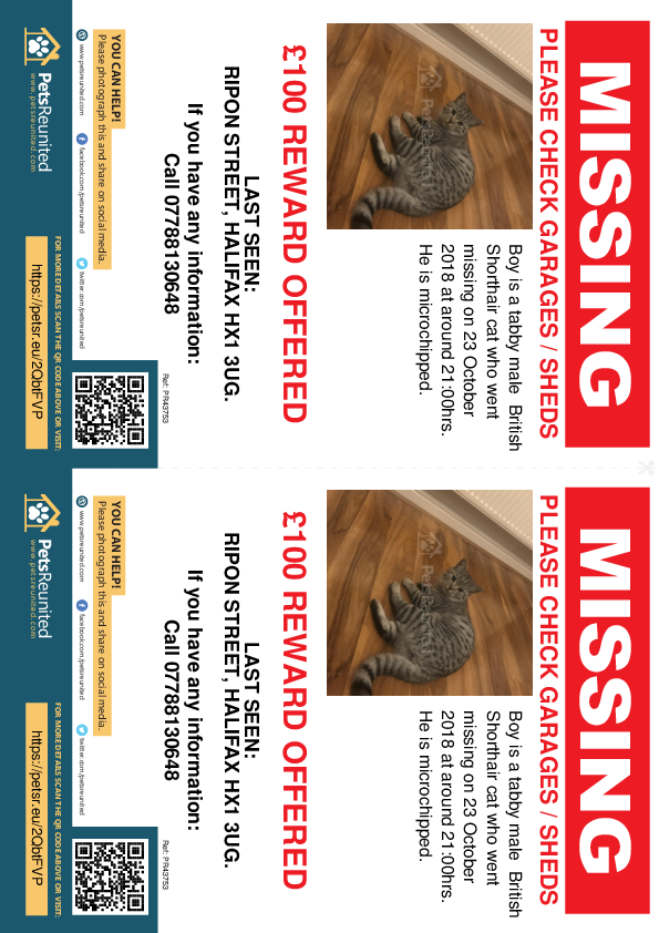 Lost pet flyers - Lost cat: Tabby British Shorthair cat called Boy