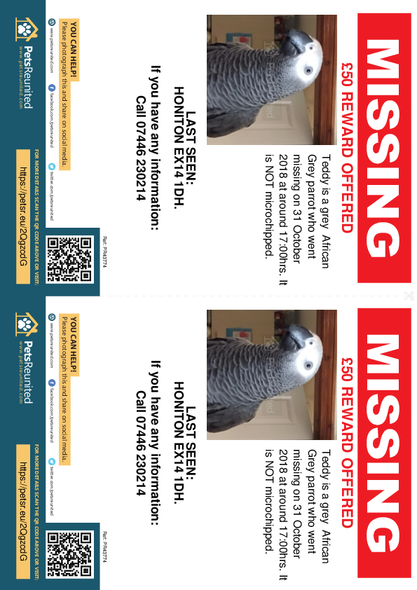 Lost pet flyers - Lost parrot: Grey African Grey parrot called Teddy