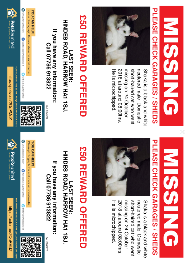 Lost pet flyers - Lost cat: Black and white cat called Shaka