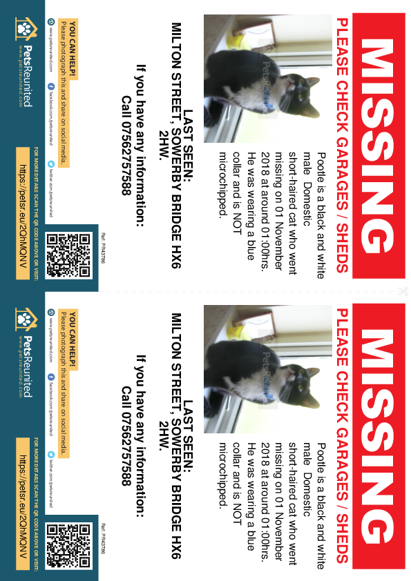 Lost pet flyers - Lost cat: Black and white cat called Pootle