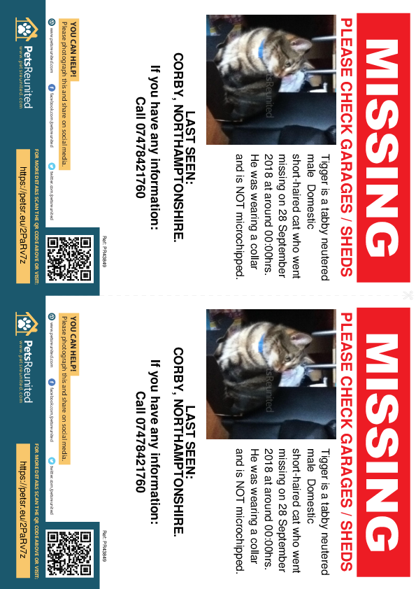 Lost pet flyers - Lost cat: Tabby cat called Tigger