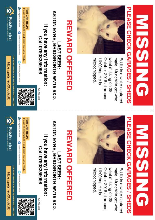 Lost pet flyers - Lost cat: white Munchkin cat called Eddie