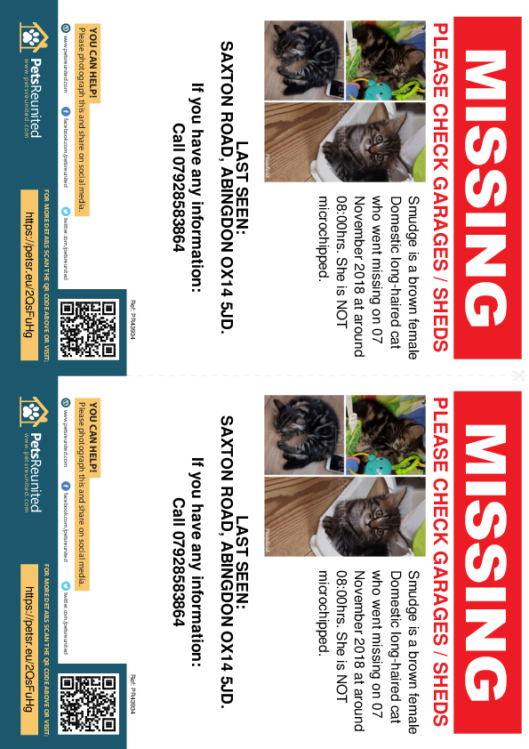 Lost pet flyers - Lost cat: Brown cat called Smudge
