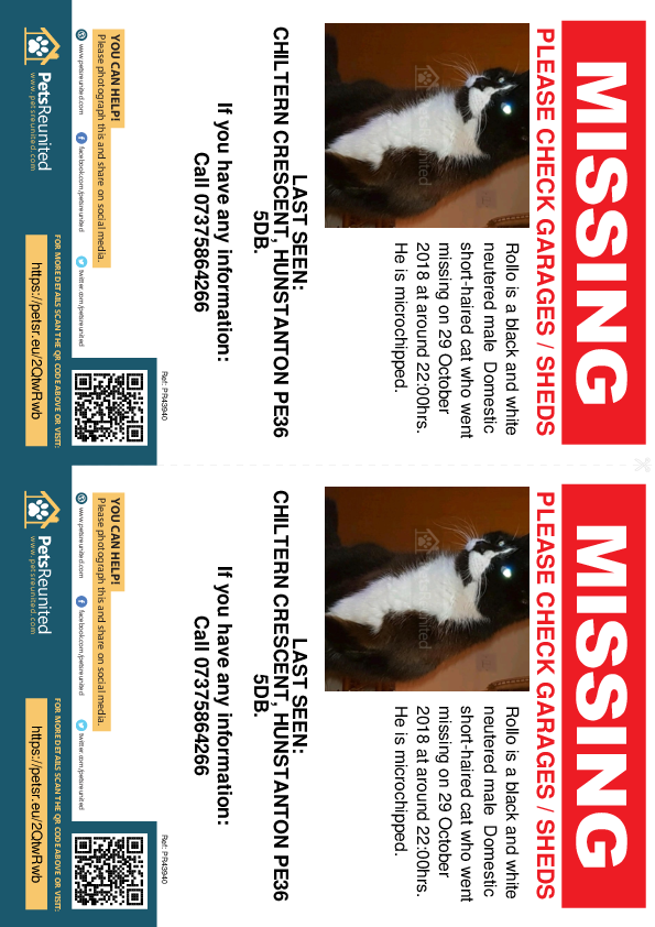 Lost pet flyers - Lost cat: Black and white cat called Rollo