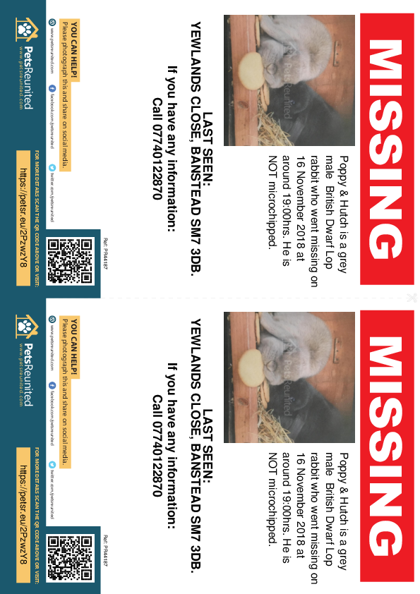 Lost pet flyers - Lost rabbit: Grey British Dwarf Lop rabbit called Poppy & Hutch