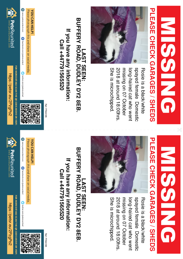 Lost pet flyers - Lost cat: Black/White cat called Rosie