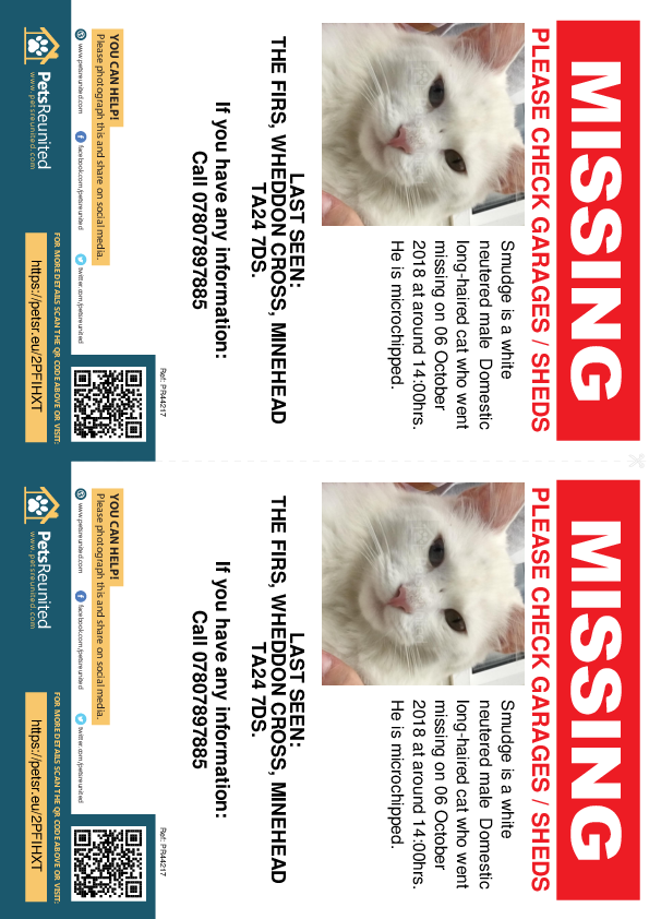 Lost pet flyers - Lost cat: White cat called Smudge