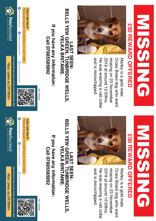 Lost pet flyers - Lost dog: Gold dog called Marley