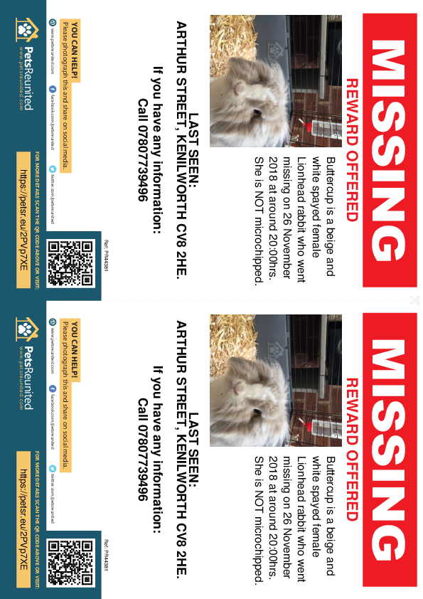 Lost pet flyers - Lost rabbit: Beige and white Lionhead rabbit called Buttercup