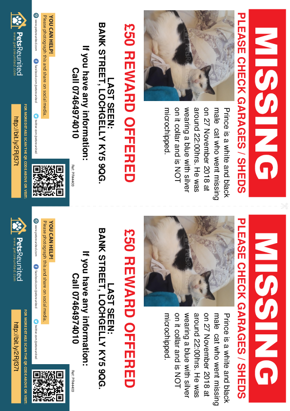 Lost pet flyers - Lost cat: White and black cat called Prince