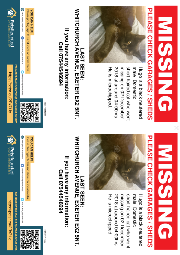 Lost pet flyers - Lost cat: Black cat called Hugo
