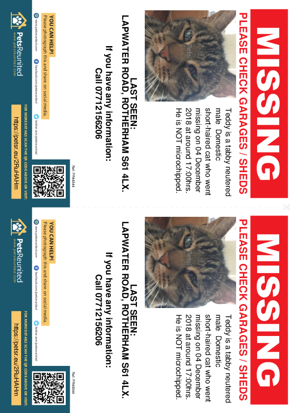 Lost pet flyers - Lost cat: Tabby cat called Teddy
