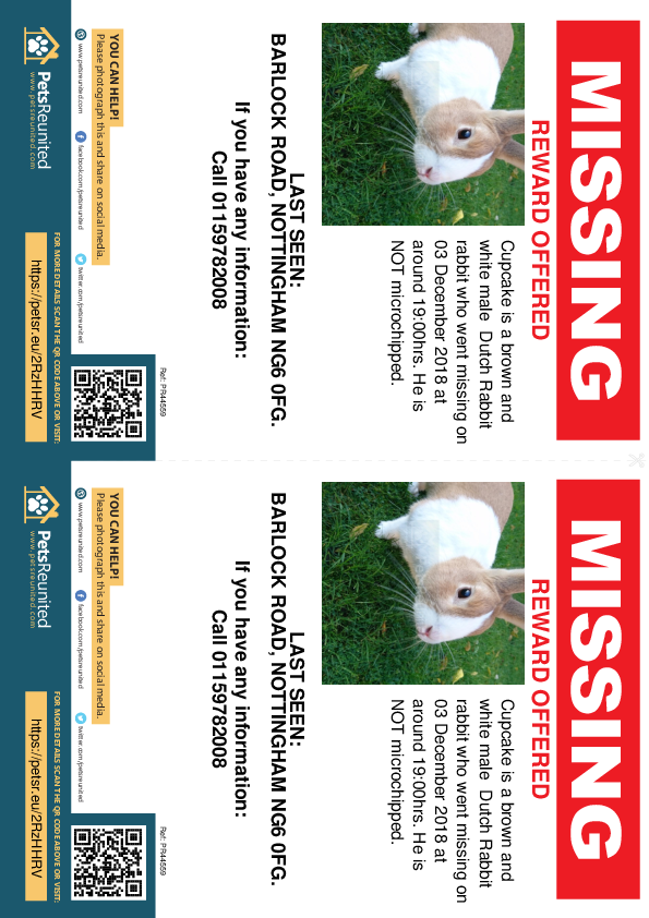 Lost pet flyers - Lost rabbit: Brown and White Dutch Rabbit rabbit called Cupcake