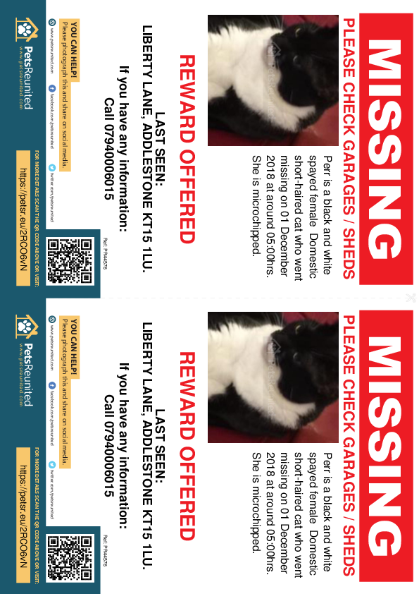 Lost pet flyers - Lost cat: Black and white cat called Perr