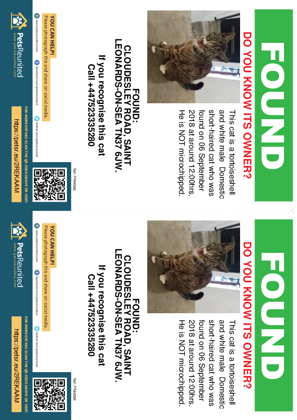 Found pet flyers - Found cat: Tortoiseshell and white cat
