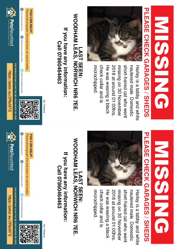 Lost pet flyers - Lost cat: Tabby and white cat called Harley