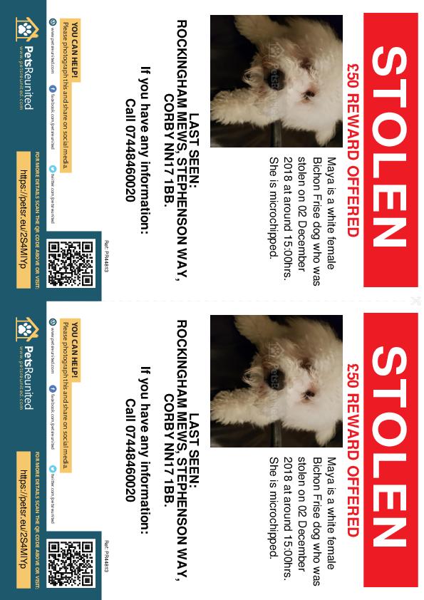Stolen pet flyers - Stolen dog: White Bichon Frise dog called Maya