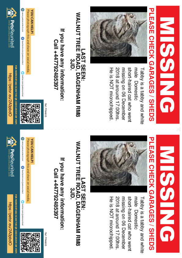Lost pet flyers - Lost cat: Tabby and white cat called Tabby