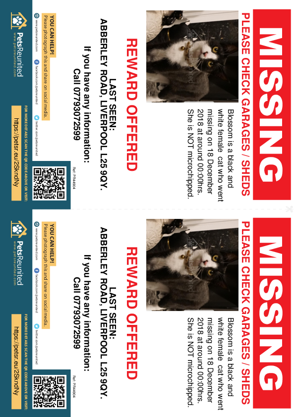 Lost pet flyers - Lost cat: Black and white cat called Blossom