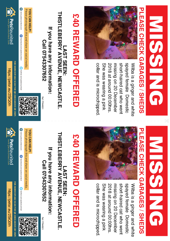 Lost pet flyers - Lost cat: Ginger and white cat called Wilba