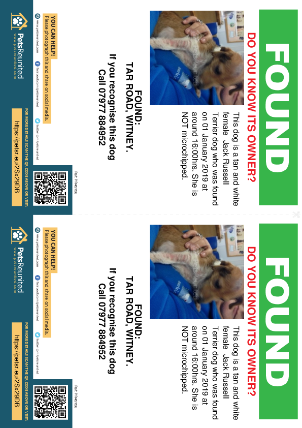 Found pet flyers - Found dog: Tan and White Jack Russell Terrier dog