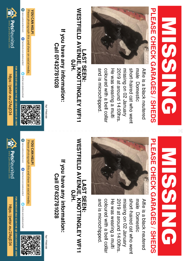 Lost pet flyers - Lost cat: Black cat called Alfie